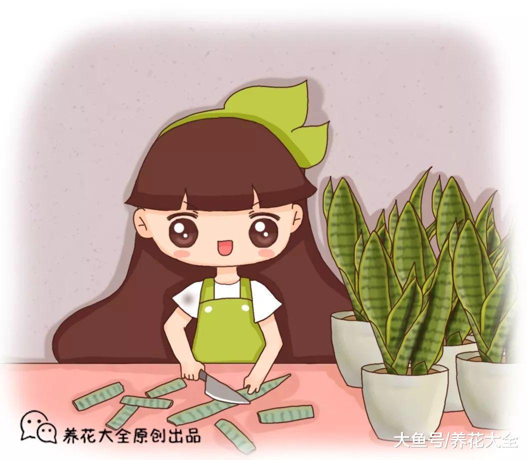 虎皮兰、绿萝、长寿花, 1根枝条这么做, 变100