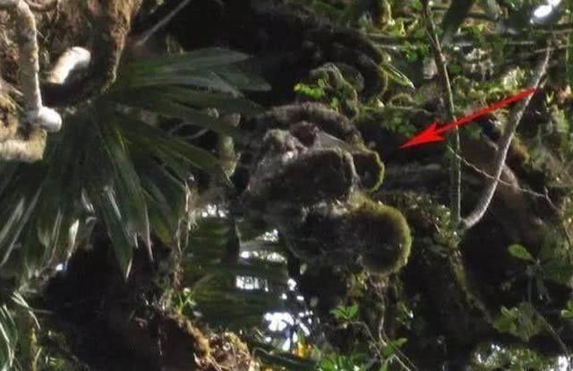 最不幸的跳伞,被挂在树上整整72年,死者遗体早已杂草丛生