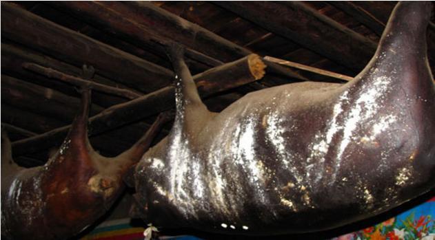 最惨的猪:勒死再缝合,悬挂房梁数十年成珍品