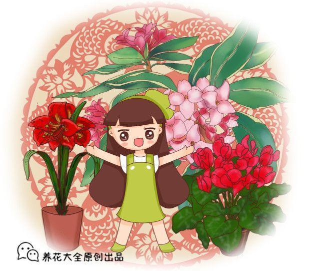 6种洋气的年宵花, 养一盆招财纳福