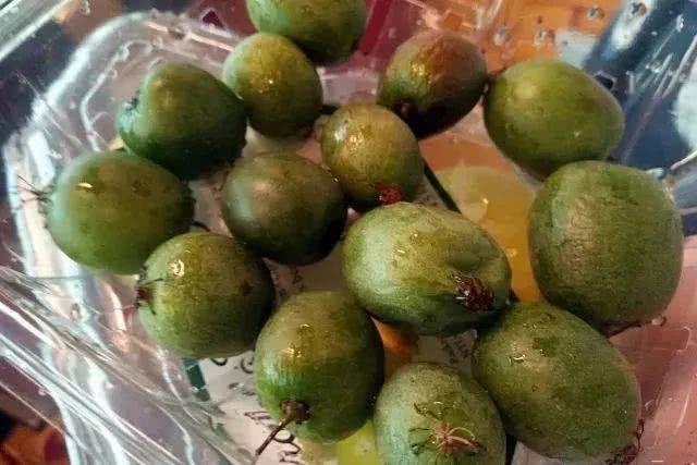 猕猴桃和奇异果到底有什么区别?你可别买错了