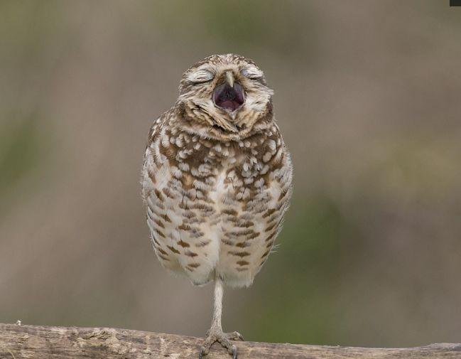 一只单腿站着睡觉的穴小�^, 因为睡不着而烦躁的小鸟