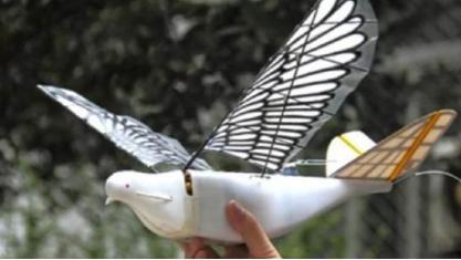 中国无人机这次真的厉害了 仿生间谍鸟可乱真 让敌人无秘可保