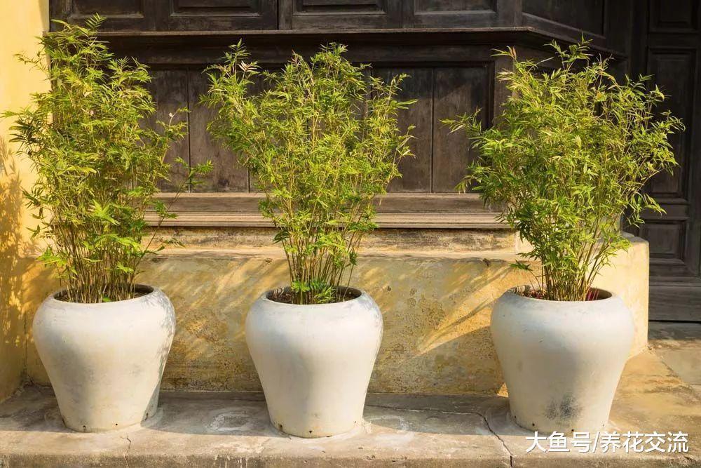 过年适合摆在家里的4种盆栽绿植和果树, 你家里摆了几种?