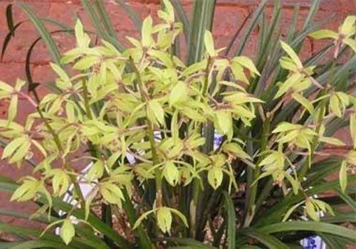 别人家兰花绿油油, 开的花都比自家美, 原来她们是这么做的!
