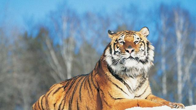 传说中以虎为食的神兽,起源说法不一,在几百年前的广西还存在过!