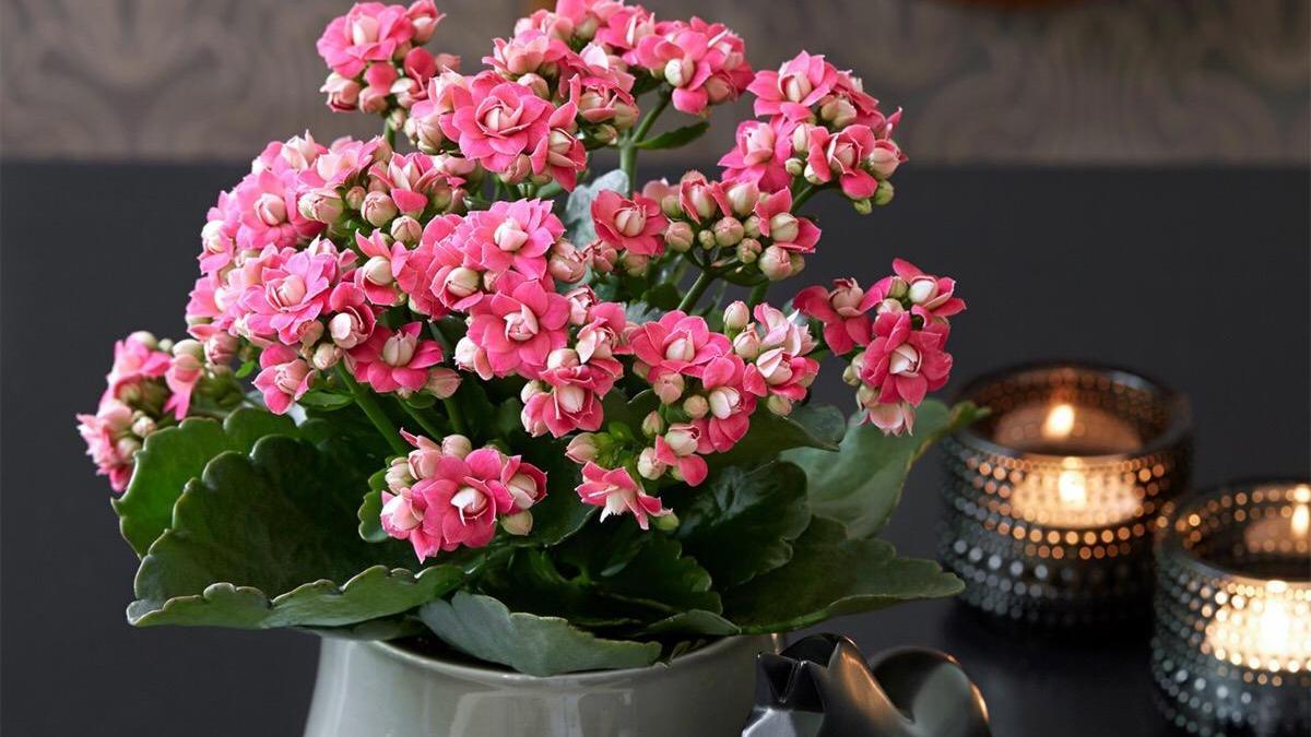 适合夏天栽的小绿植,让你家里的环境更清新,净化空气还养眼