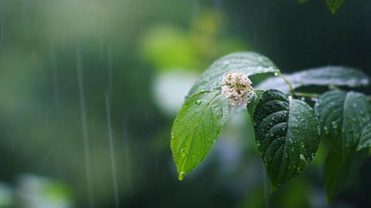 离夏雨很近的地方