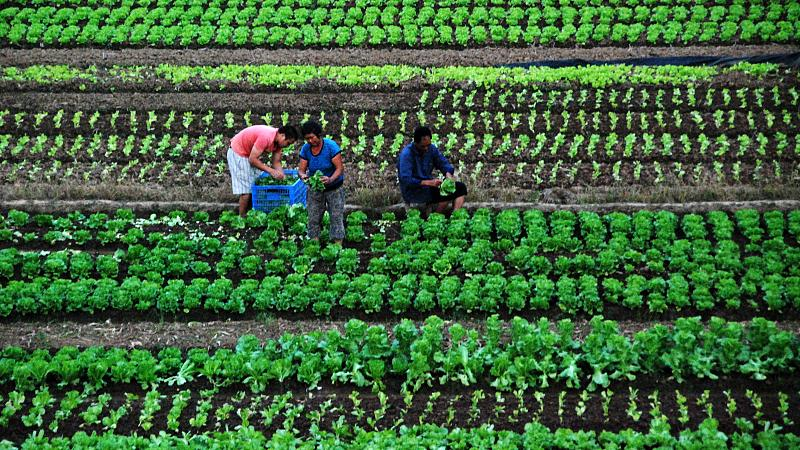农保已经涨到400多,每年入社保合适还是农保合适呢?
