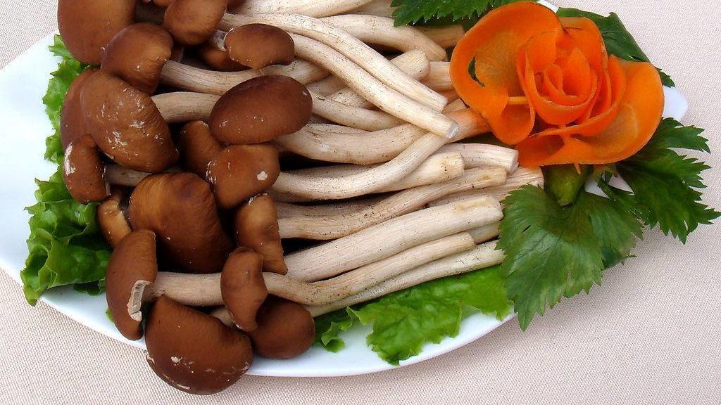 鲜美可口的茶树菇,是一种食药用菌,其营养十分丰富