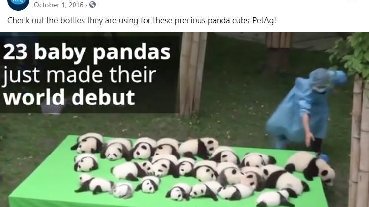 实测美国petag猫狗1段奶粉,熊猫都吃这个牌,名副其实吗?