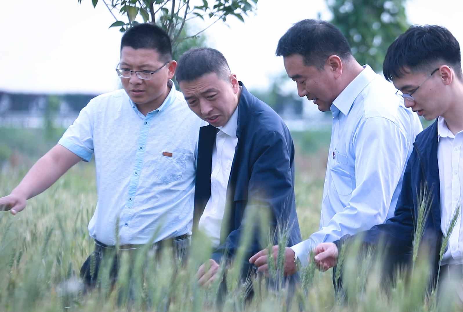 农产品,平台东明县,山东,农产品,平台,娘家