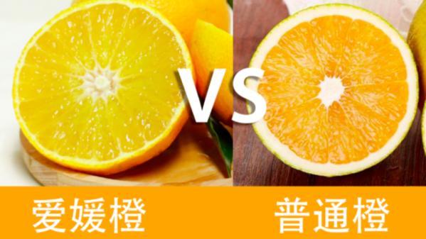 一夜爆红,可以吸着吃的果冻橙,每一口都爆汁,你吃过没有?
