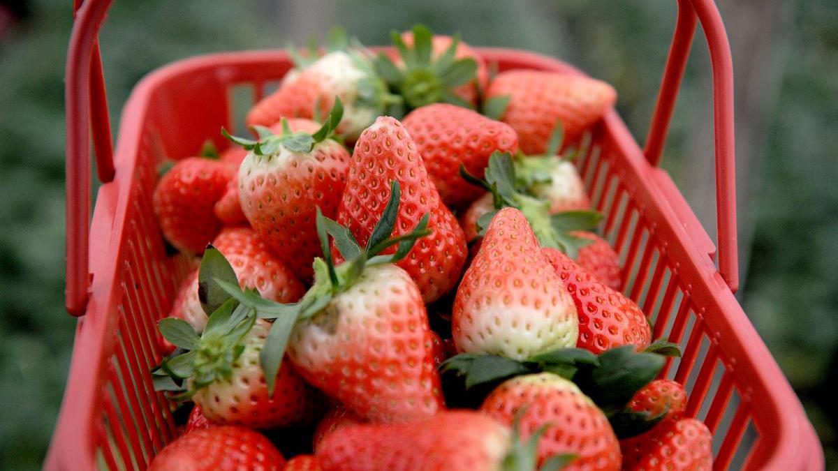 好吃的草莓干不多,我这恰巧有一包,酸甜香脆可口,好吃到没朋友