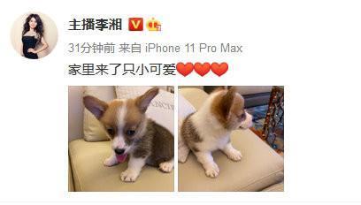 王岳伦事件再次升级,更多亲密照片流出,夫妻名下公司已注销