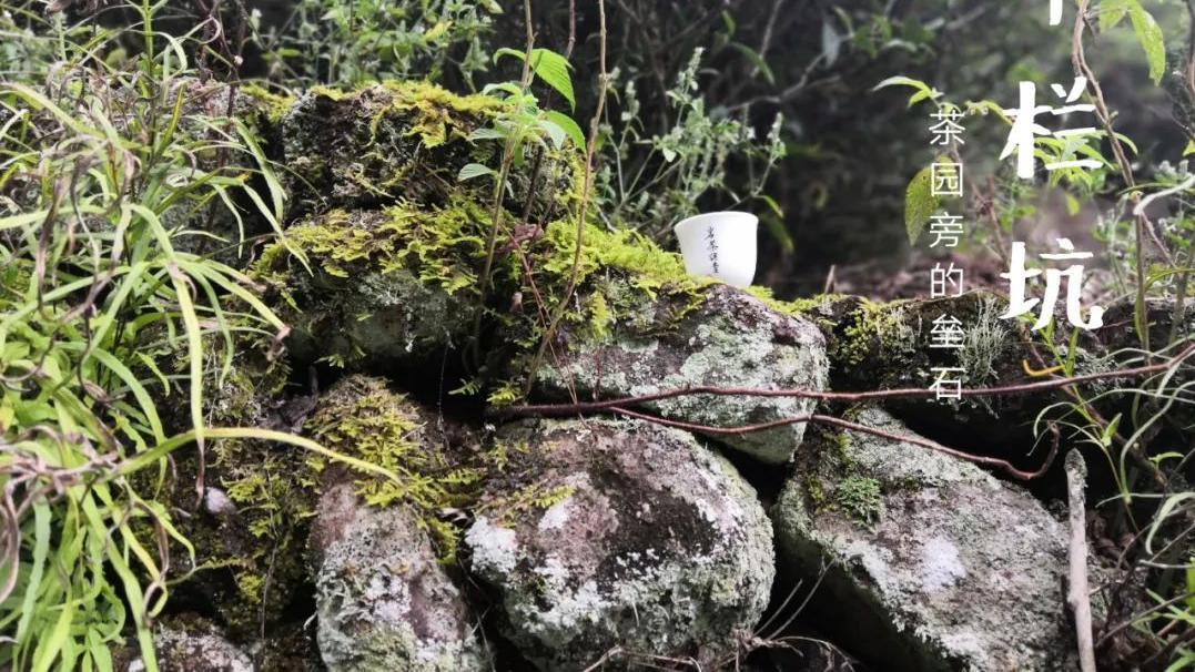 牛栏坑肉桂就是个名字,所有高端的武夷岩茶肉桂,都可以做牛肉?
