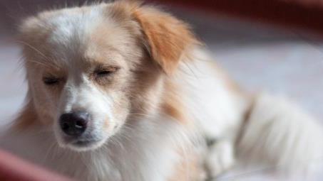 如何挑选优质的狗羊奶粉?