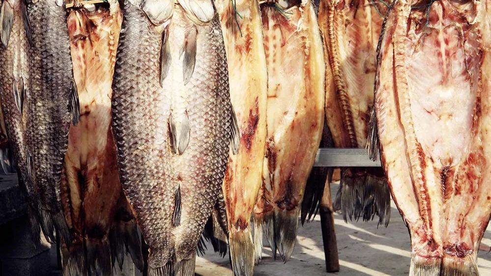 此鱼最喜欢吃螺蛳,鱼胆有大毒却是难得药材,鱼肉腌制鱼干是一绝