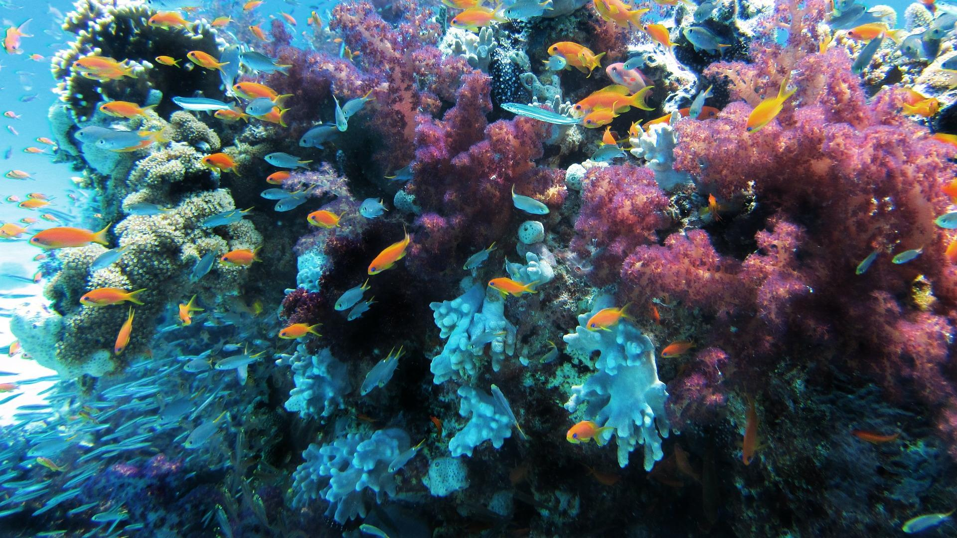 为了保护珊瑚礁,欧州防晒大厂妮维雅,Sunozon和优色林竟然携起了手
