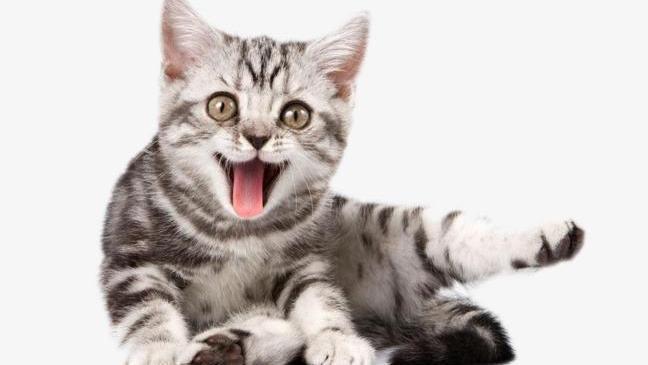 猫咪奶粉的作用