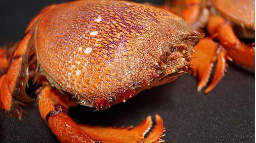 世界最贵的4种海鲜,中国上榜1种,加州鲍鱼,1个够8个成年人吃饱