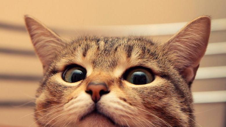 猫能喝奶粉吗?为什么要喝羊奶粉?