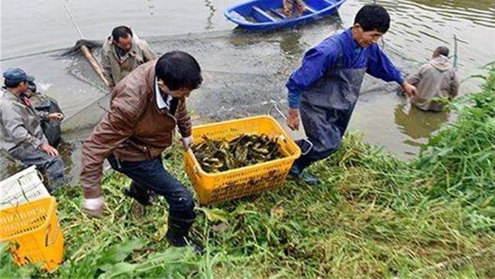 """价格连涨成""""黄金鱼"""",一个月涨价近50%,农民却高兴不起来"""