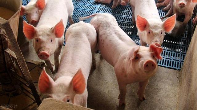"""猪价""""6连涨"""",飘红一片,8月还要涨?还能吃上""""白菜肉""""吗?"""