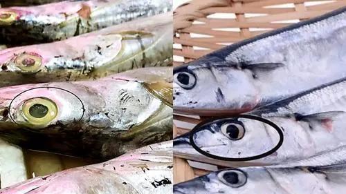 买带鱼,黑眼睛和黄眼睛区别很大,记住3买3不买,肉质鲜嫩味道好!
