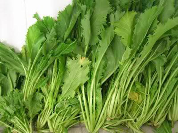 这种蔬菜在农村到处都是,居然也是治病救人的良药