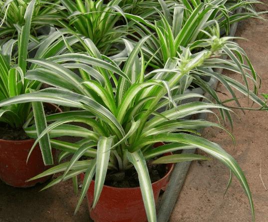 家里有老人最好养这些植物,很多人都养错了!