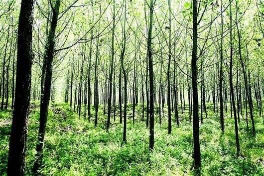 我开始怨恨了,开始想念那些树林了,想念那些鸟窝了,更想念夏天树上的