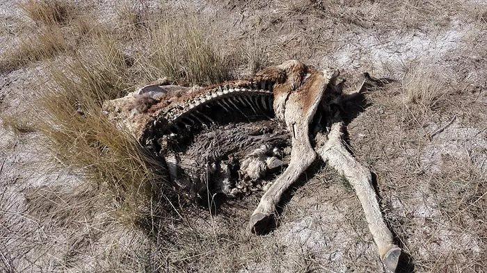 世界十年夜禁天, 人畜有往无回, 那里随处皆是尸体