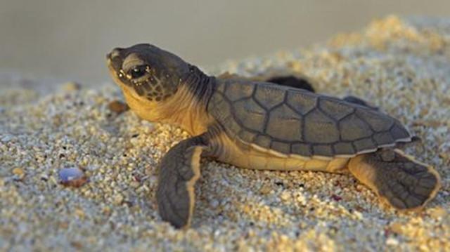 这10种呆萌可爱的动物,祖先竟是庞然大物
