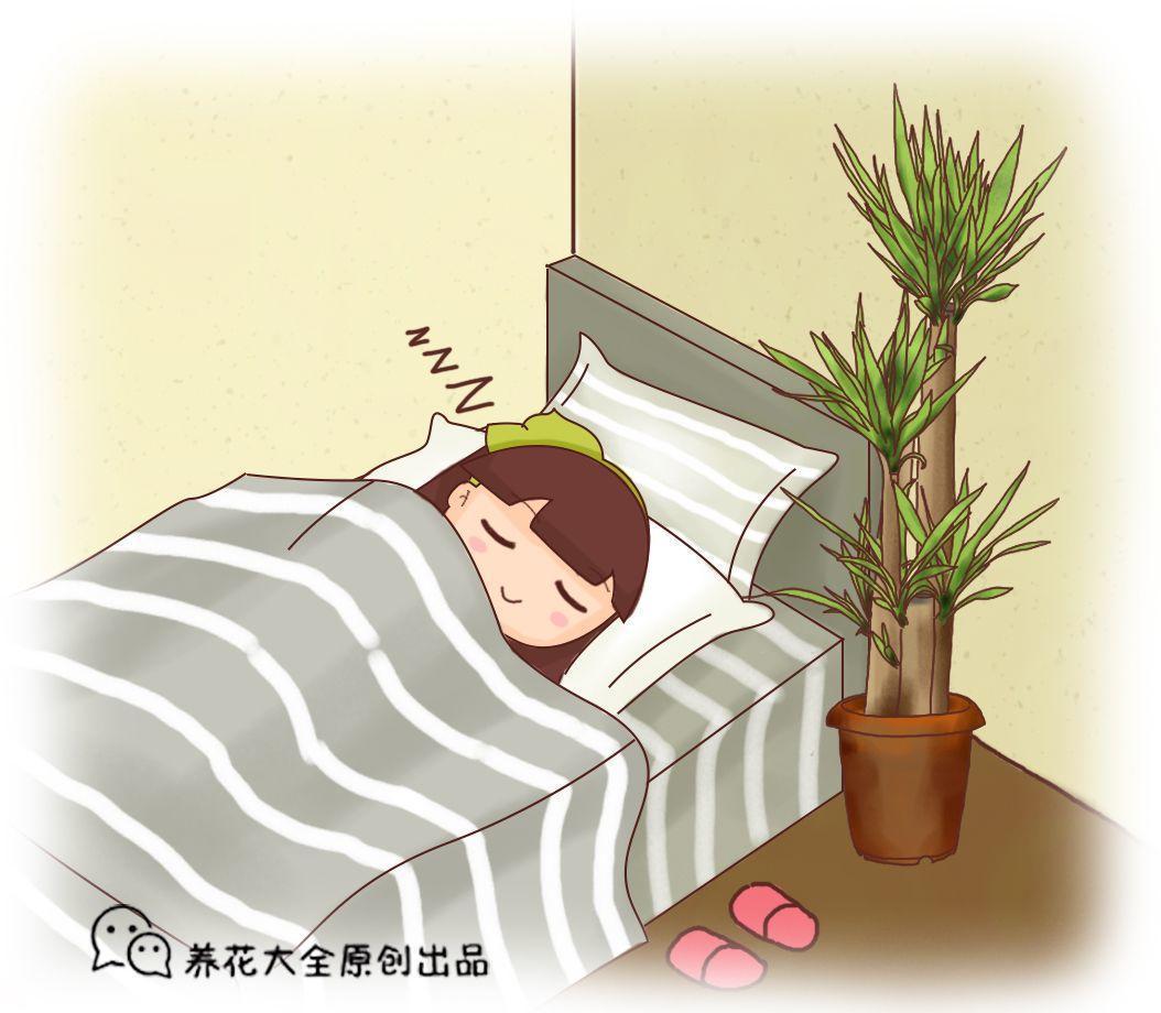 天气越来越干燥, 家里水仙别乱养, 小心晚上睡不好!