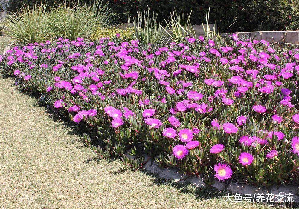 这6种植物铺在地面上就能不断开花繁殖, 还能避免杂草长出来