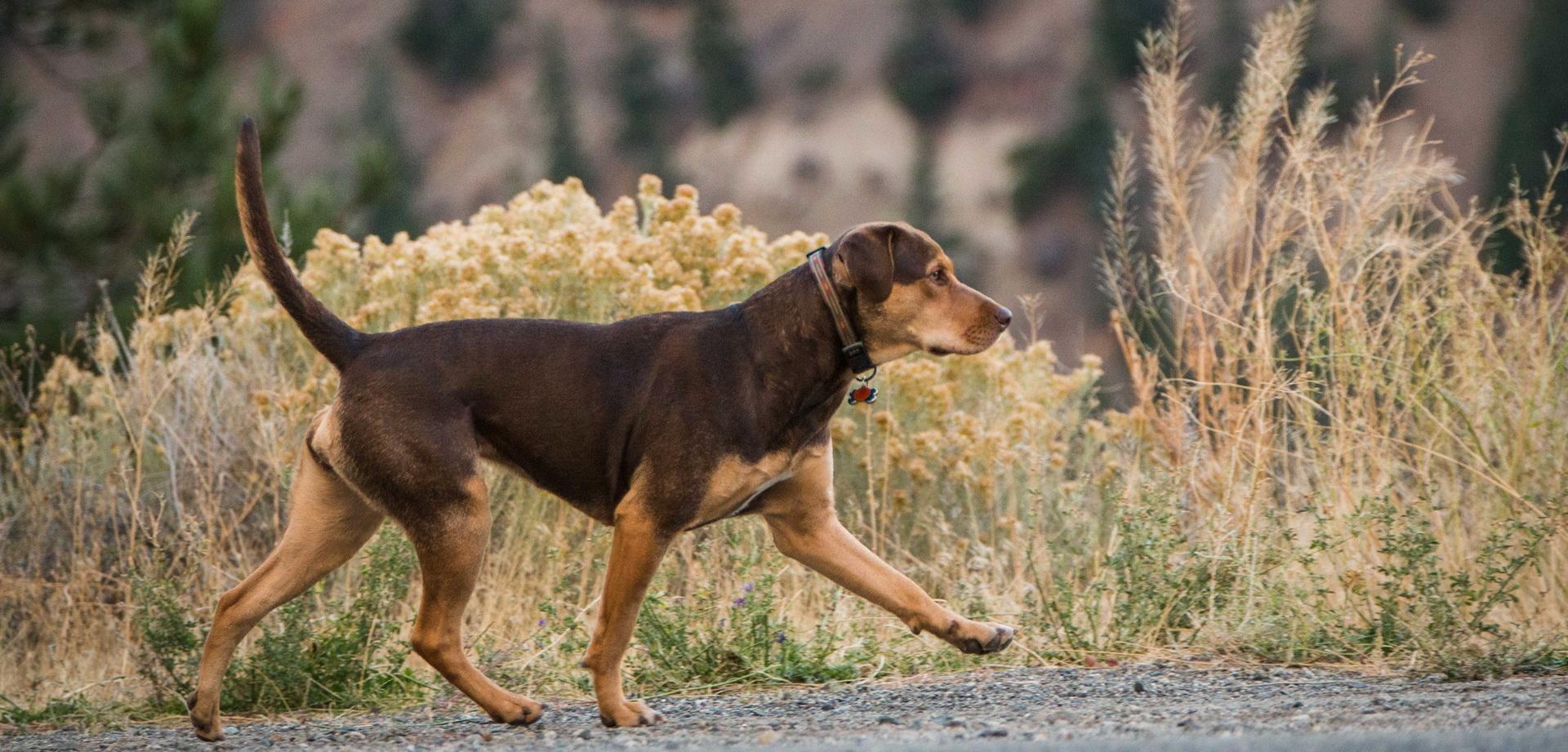 电影《一条狗的回家路》定档发布会, 中国小贝拉寻找新主人!
