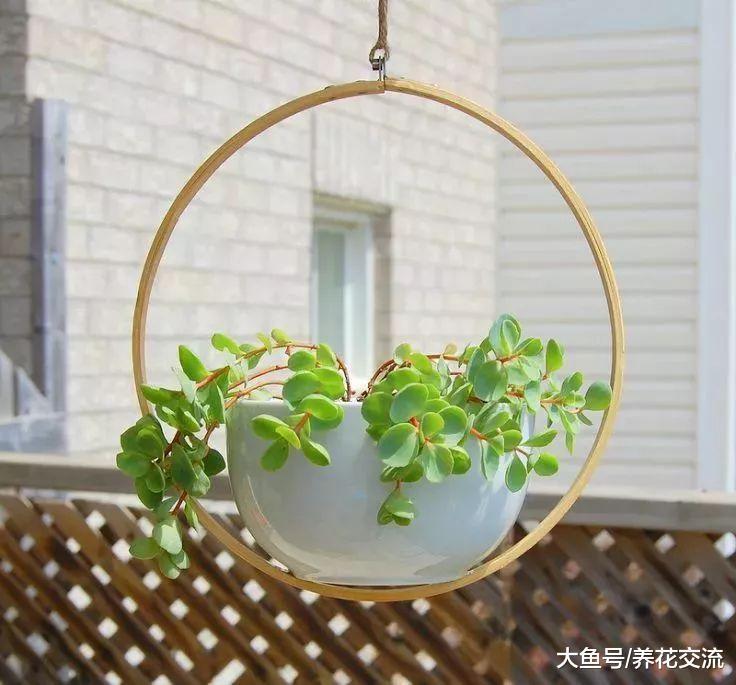 这些DIY的精致吊盆适合养窗台边, 让盆栽更清新动人