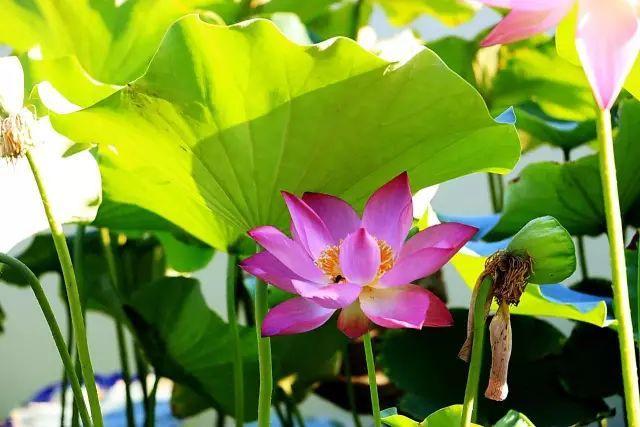 感悟人生的经典佛语语录, 深刻透彻, 都是阅历的总结!