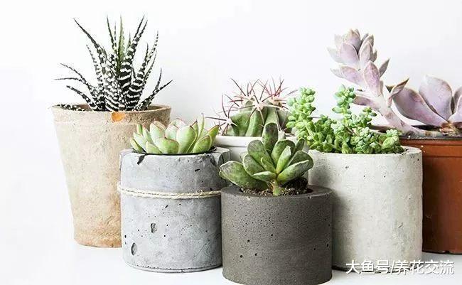 别人养在家里的植物不用怎么管理就长得很好, 是这几点做得好