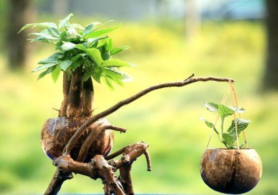 """椰子壳是养花""""宝贝"""", 张大妈用它做""""花盆、花肥"""", 太全能了"""