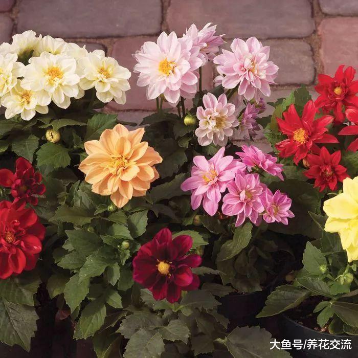 这些球茎花卉都可以在秋冬季节开花, 家里不养