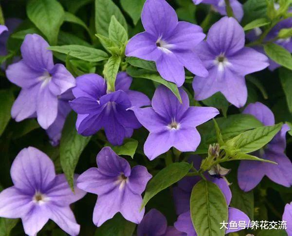 阴凉的院子、阳台特别适合养这12种花, 容易存活, 还能开花不断