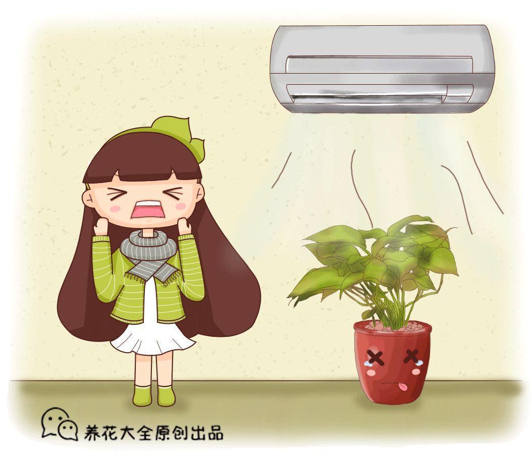"""文竹一供暖就黄叶? 位置放错了, 全都会""""暖气病""""!"""