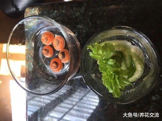 这些蔬菜头切下来不要丢, 放浅盆中就能养成新鲜盆栽