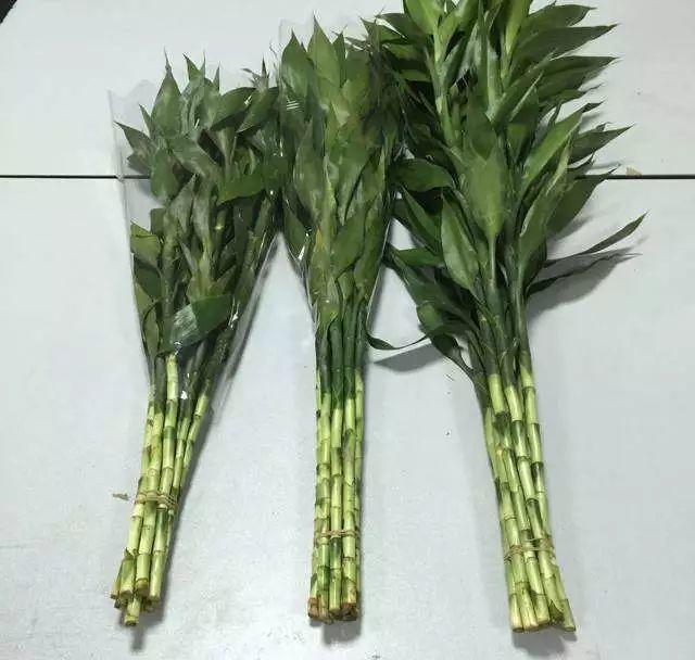"""无根的""""富贵竹"""", 7天吃1片""""药"""", 毛根嗖嗖长, 叶子翠绿"""