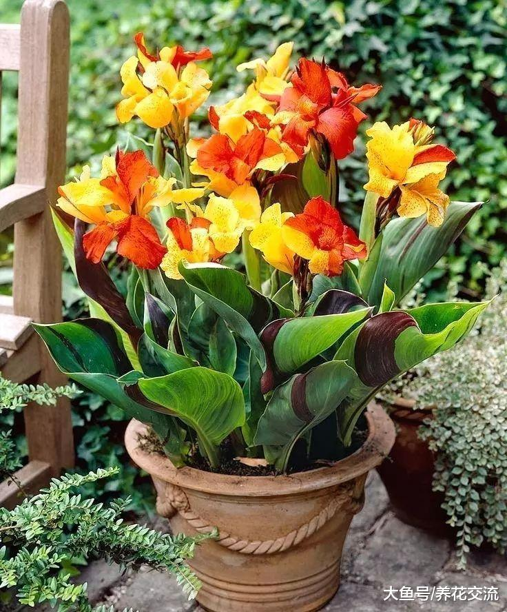 10种常年开花的植物, 养在阳台上一年四季都是