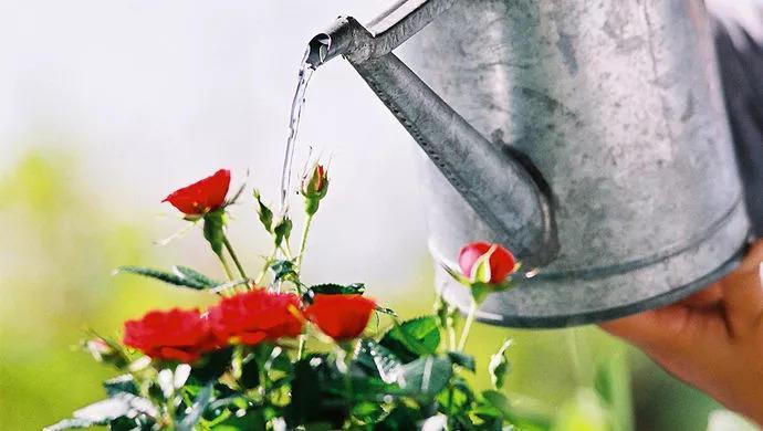 给花吃个大力丸, 根上长满小葫芦, 花盆都被撑爆了!