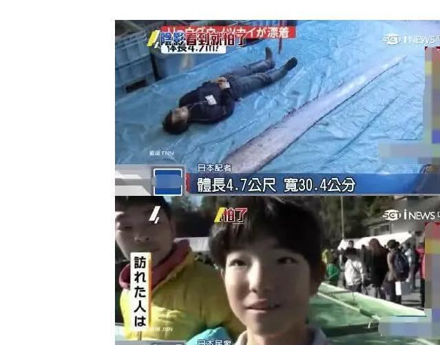 """两条巨型""""地震鱼""""同时现身日本, 日本网友: 凶兆前兆!"""