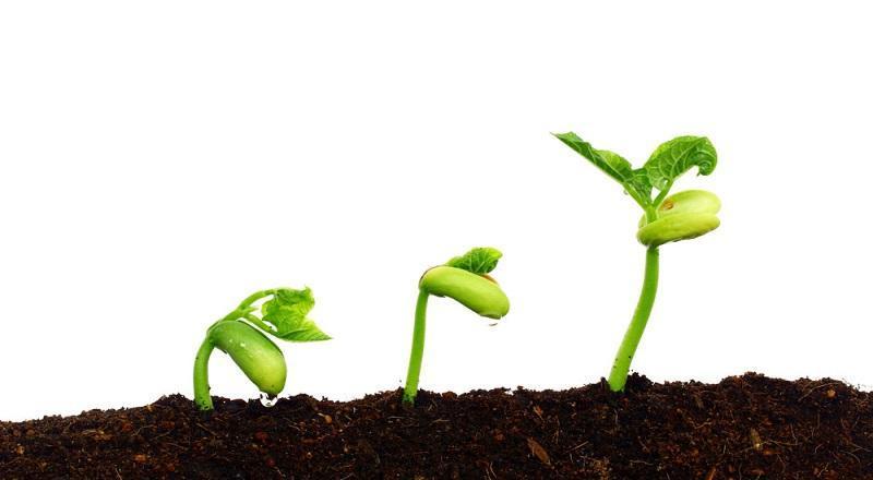 戏说植物种子为何会发芽?